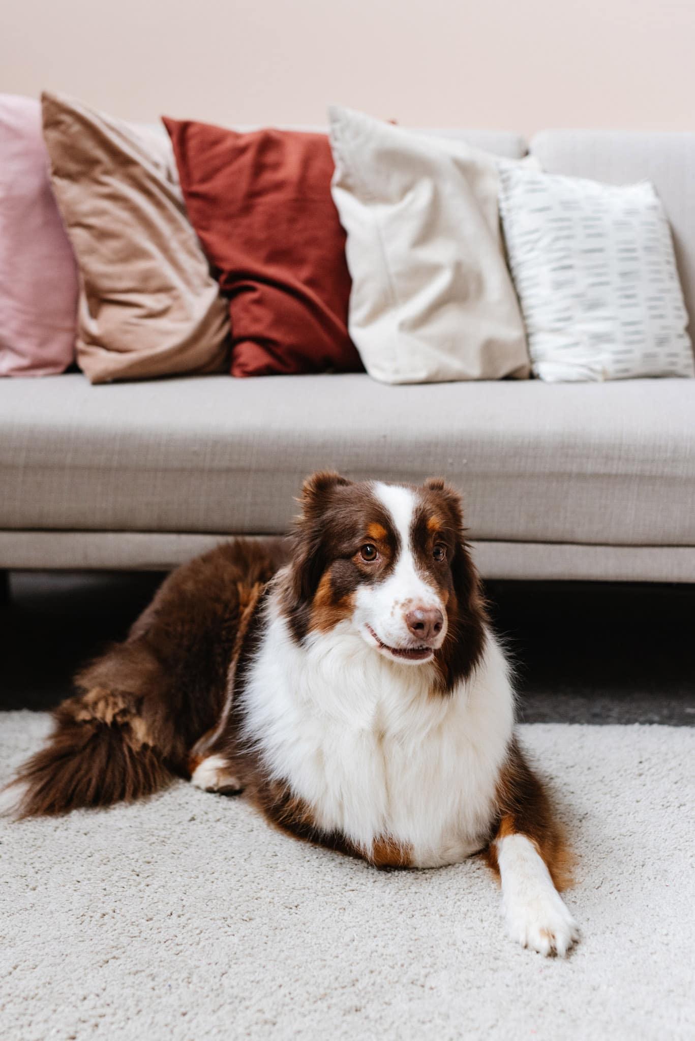 Le chien de la fondatrice de Maison Medor