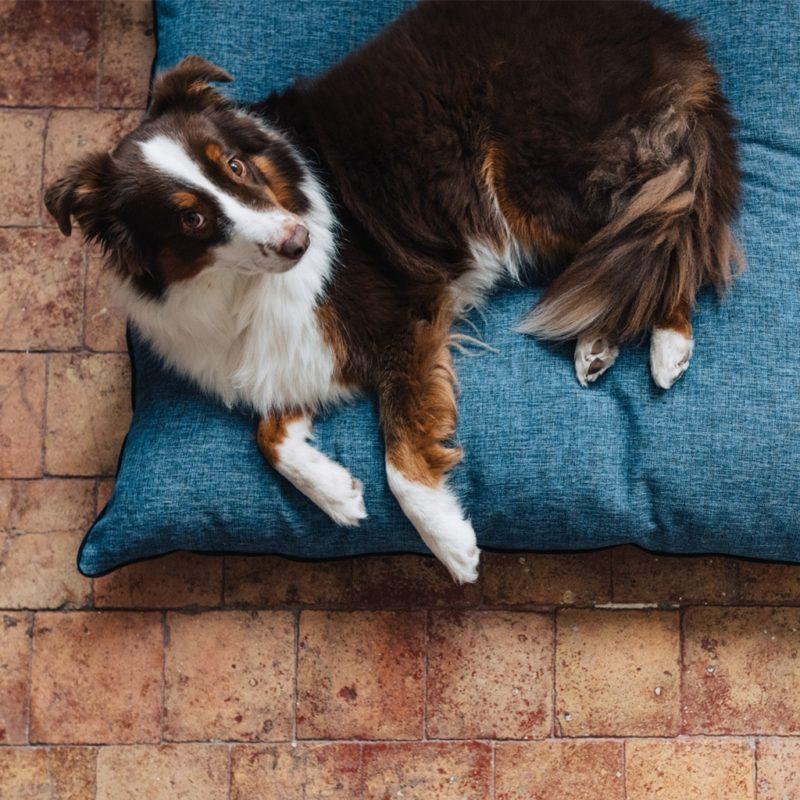 un chien confortable dans un coussin made in france par maison médor