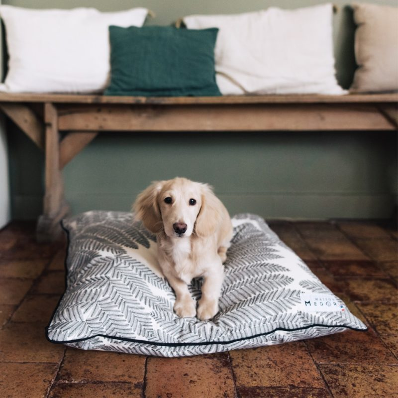 le coussin chien français de maison médor