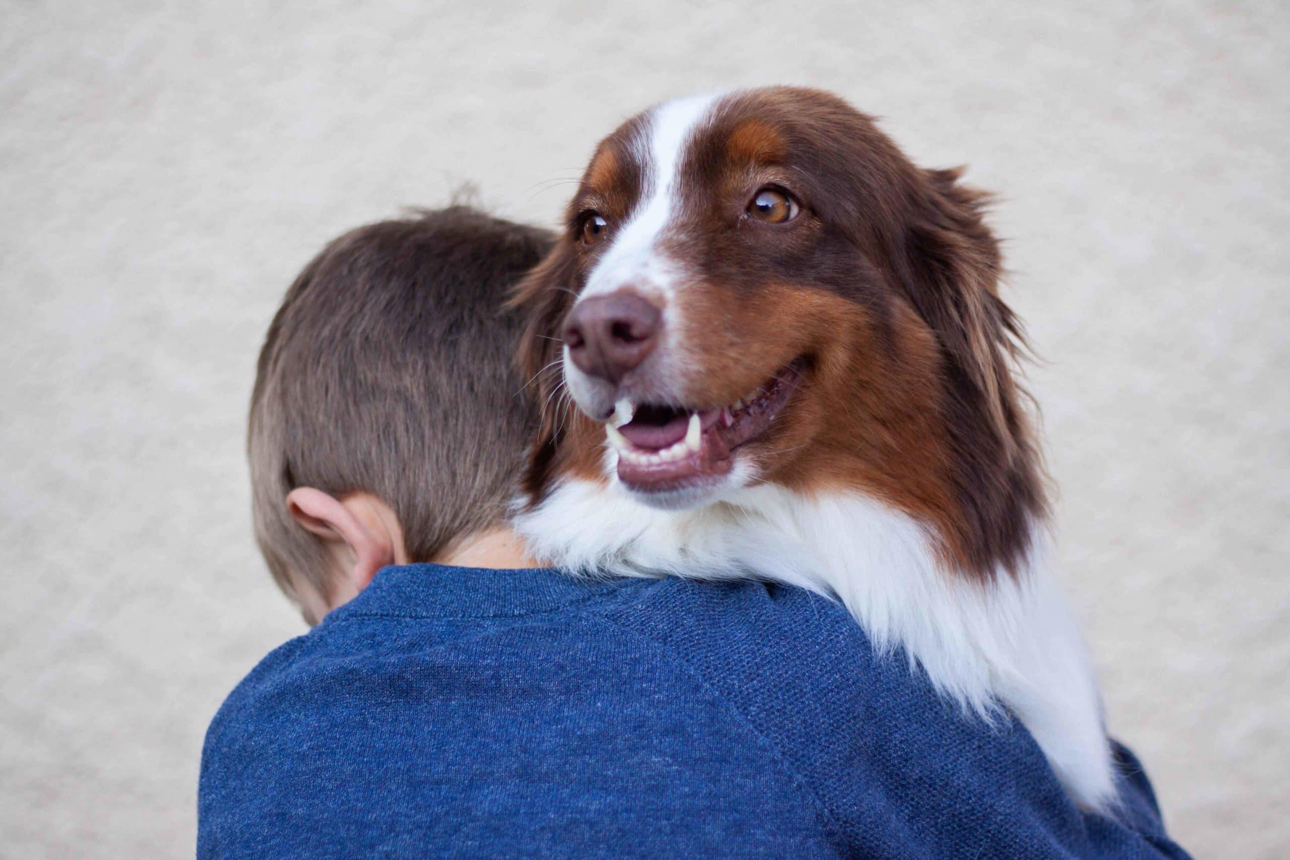 conseils pour l'adoption et la relation entre un gentil chien et un enfant