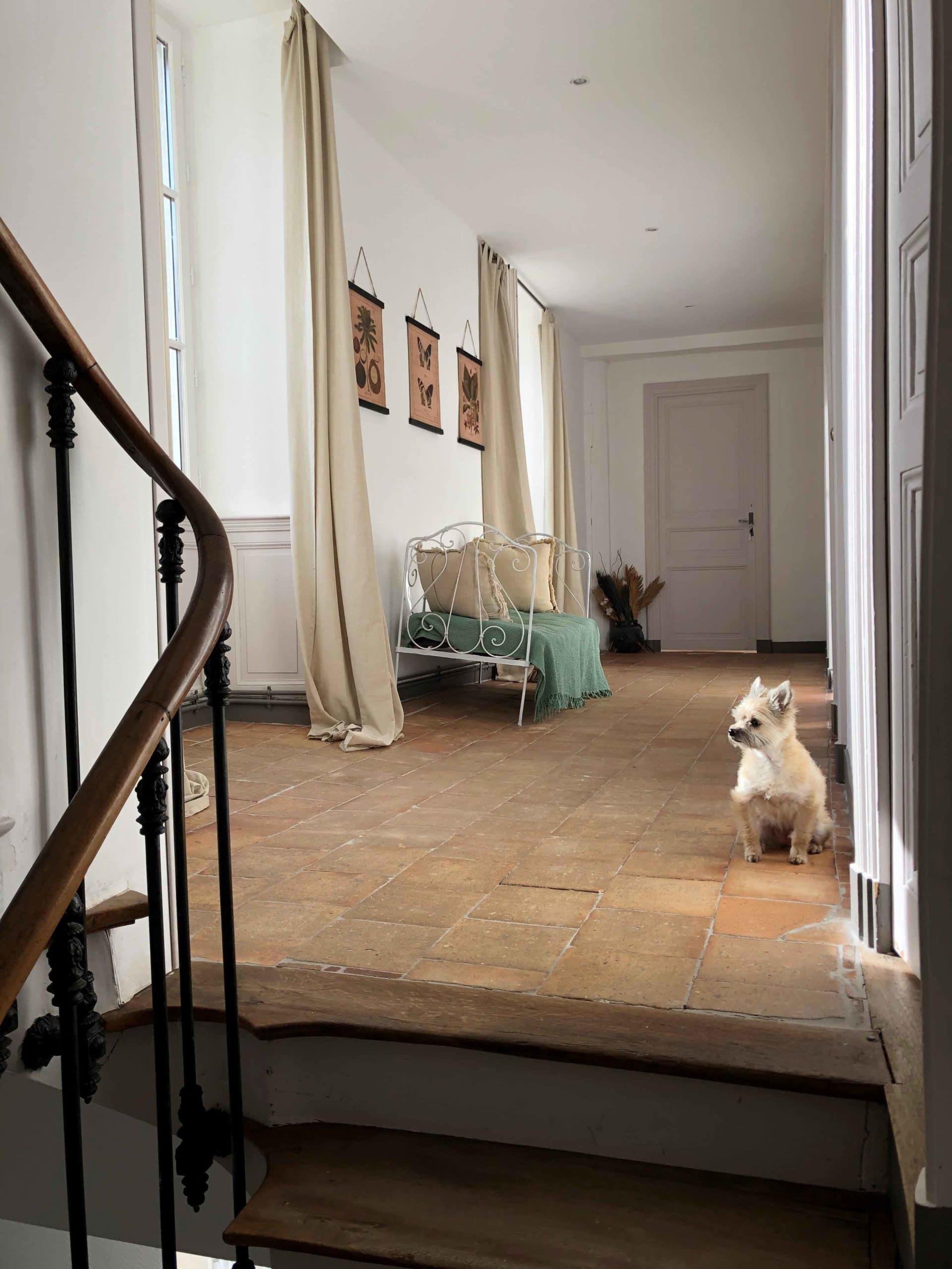 un chien dans la maison pour Maison Medor
