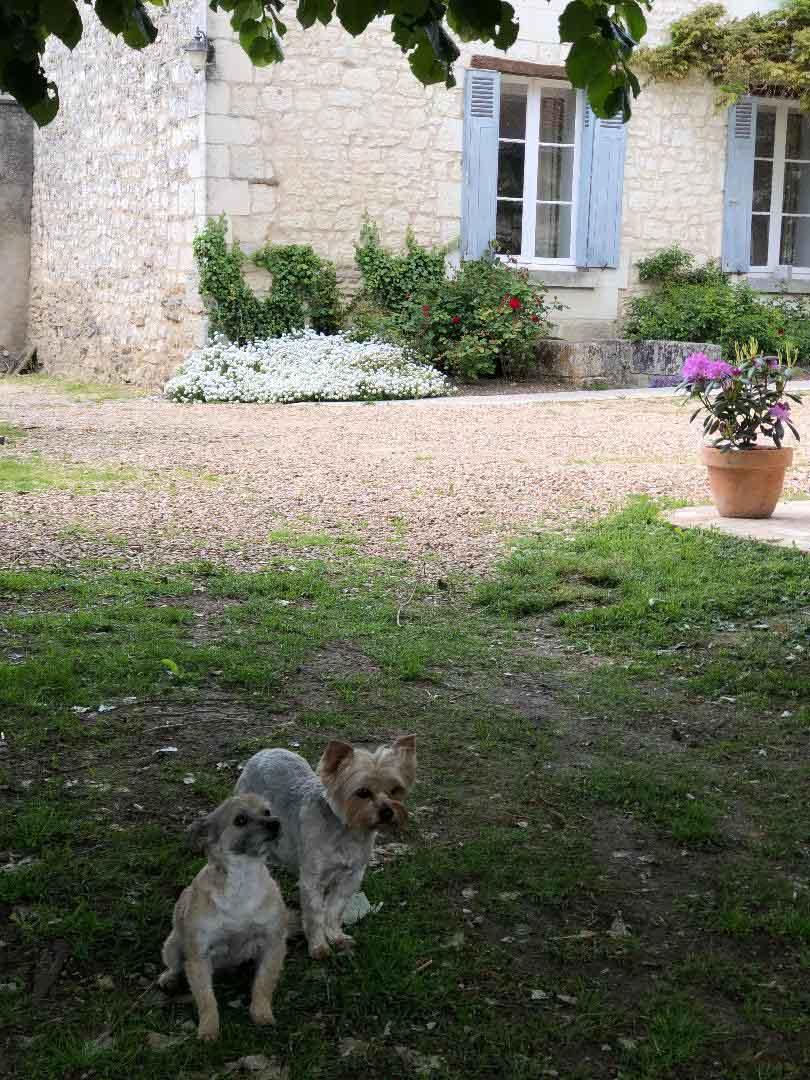 un chien dans le jardin pour Maison Medor