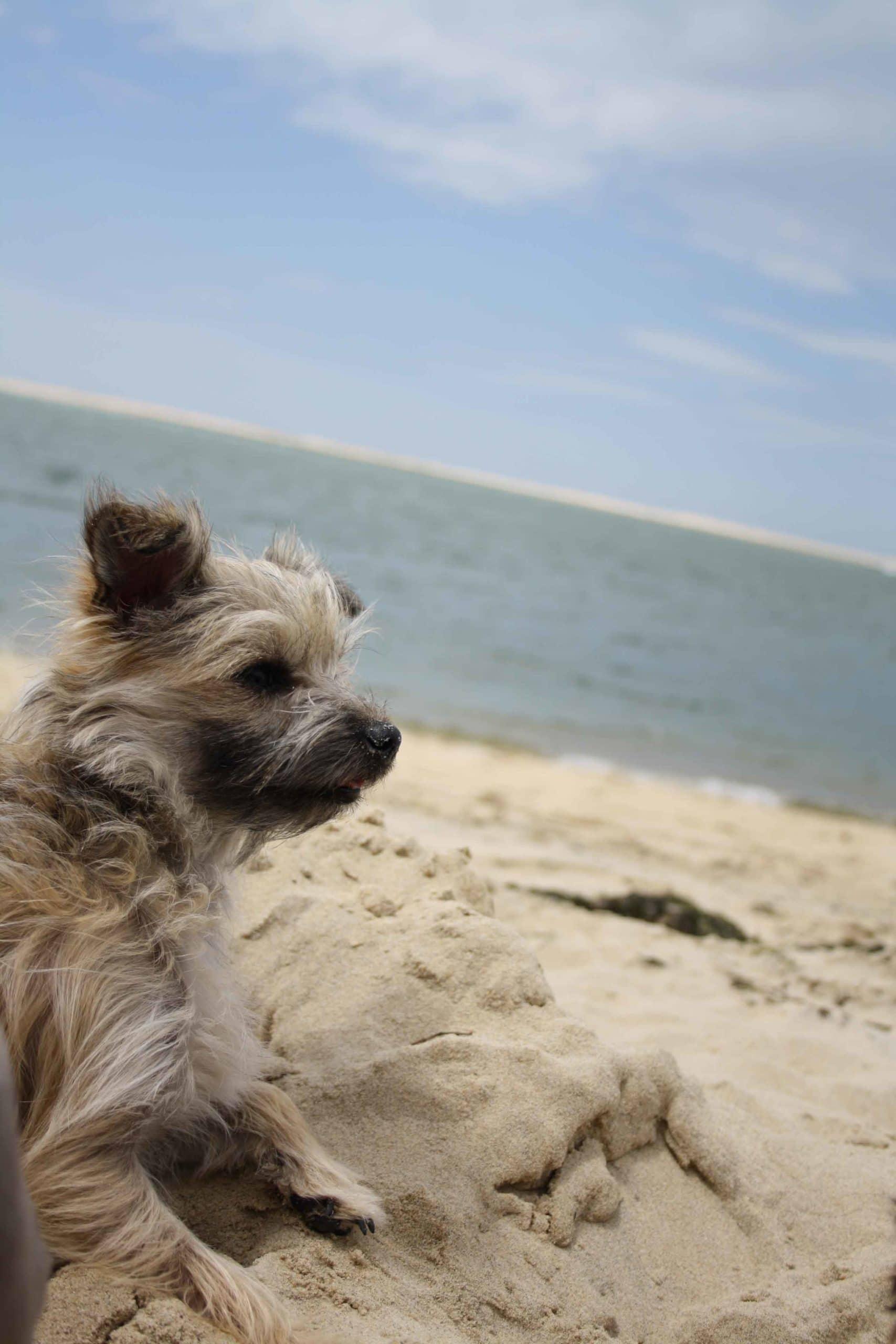 un chien a la plage pour maison medor