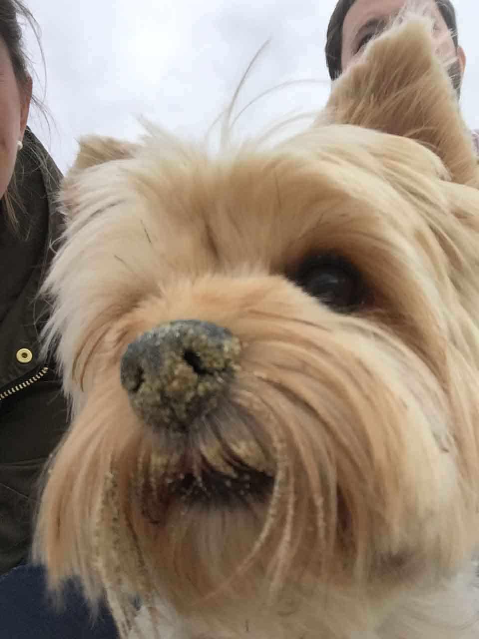 un chien avec du sable sur la truffe pour maison medor