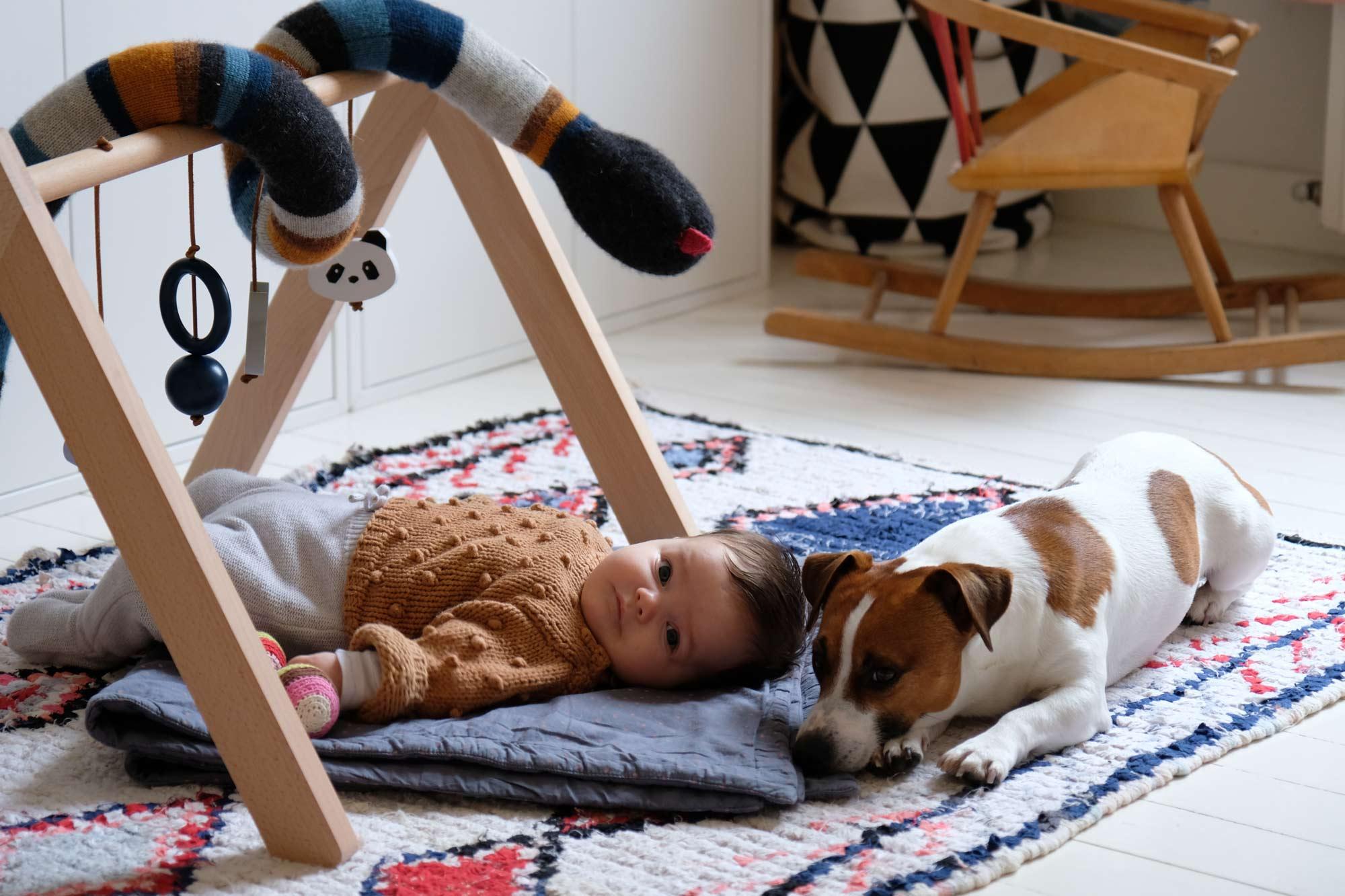 napoleon le chien de latoupie @latoupie adore les bébés