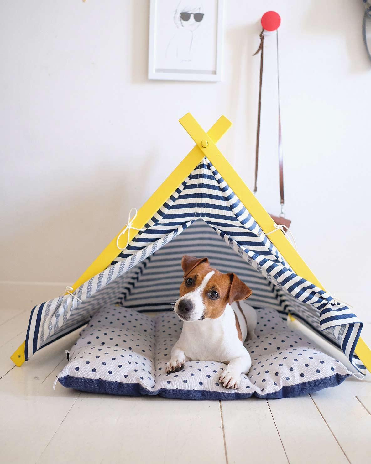 le chien de @ latoupie latoupe napoleon a la maison pour maison médor
