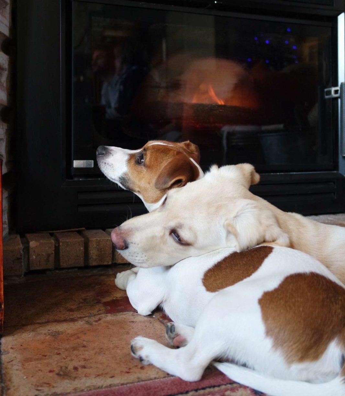@latoupie Napoléon et son copain chien pour maison medor