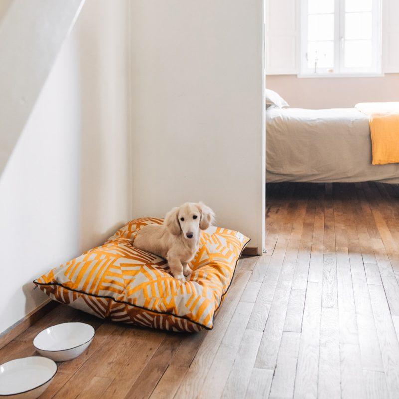 le coussin pour chien made in france indiana maison médor avec un teckel