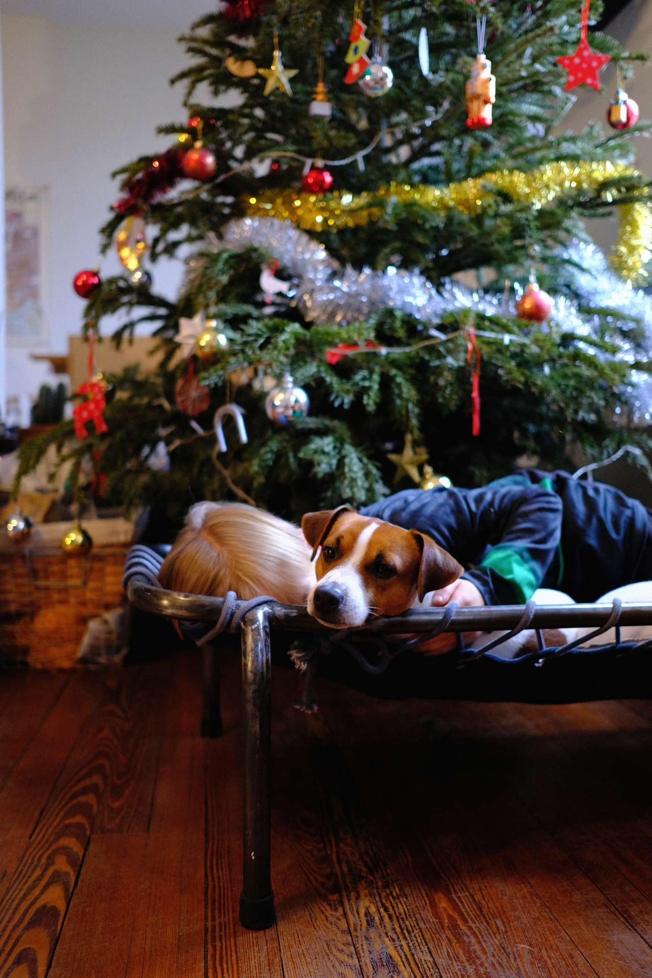 le chien napoleon pour maison medor à noel