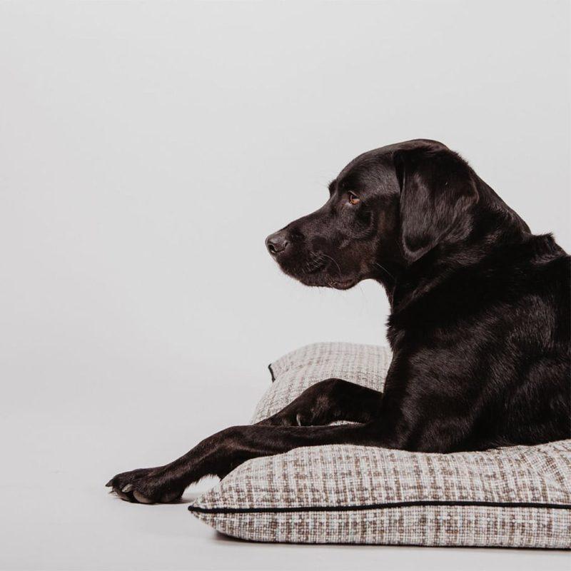 le coussin pour chien qui se lave en machine Maison Médor